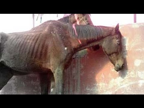 49 race horses left to die in stud farm outside Delhi