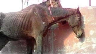 49 race horses left to die in stud farm outside Delhi