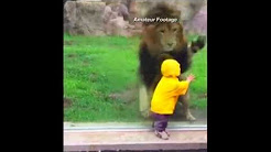 Lion Goes After Little Kid at the zoo!!