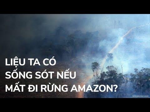 Liệu ta có sống sót nếu mất đi rừng nhiệt đới Amazon?