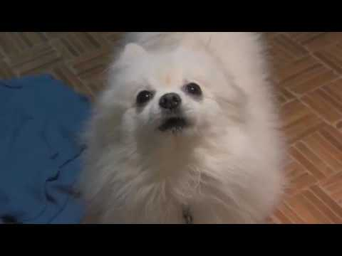 GABE THE DOG ORIGINAL VIDEO