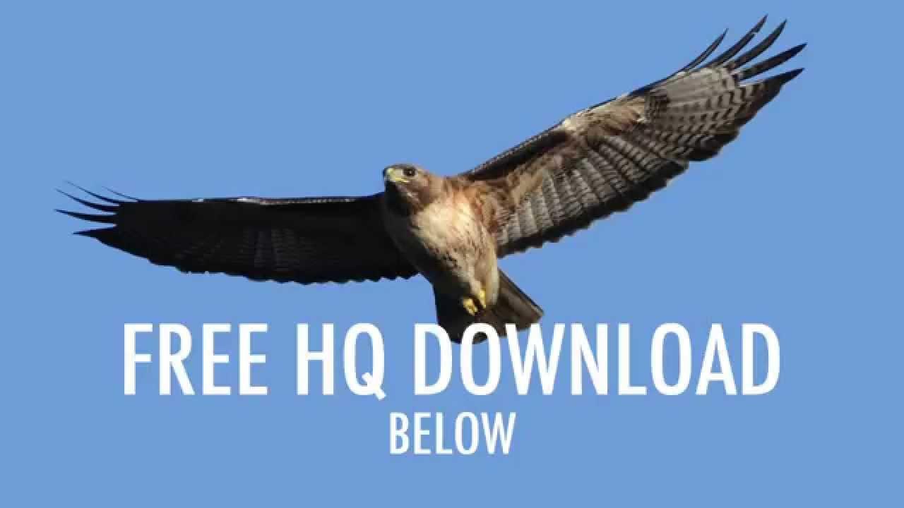 Eagle\