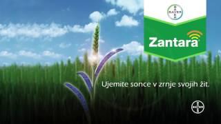 Bayer - Nov fungicid Zantara