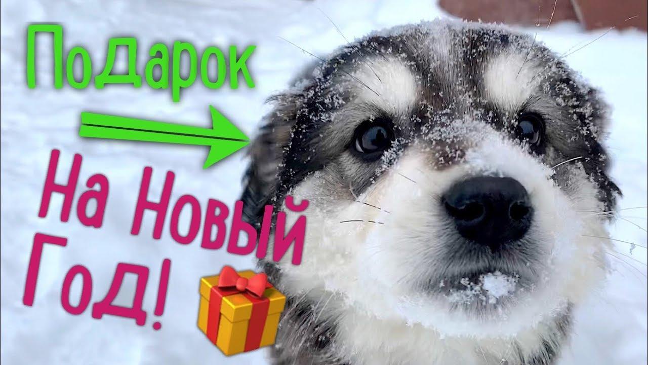 Бездомный щенок на Новый год! Ищем семью.