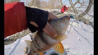ОПА ЕСТЬ!!! ВОТ ЭТО ОКУНЯРЫ КЛЮЮТ В КОРЯГАХ!!!! Рыбалка на Оби ! Первый лед 2018-2019!