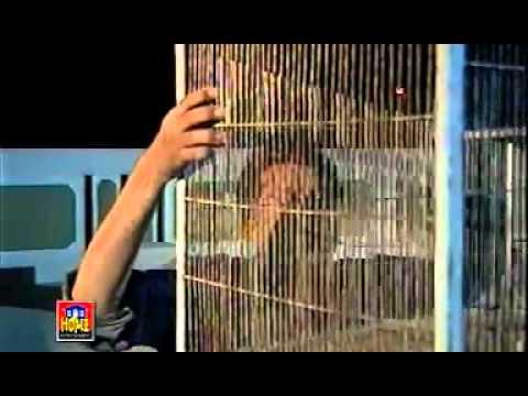 Dard Rukta Nahi Aik Pal B.. With Lyrics