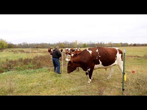 Fencing 101: Training Animals to Energized Fence