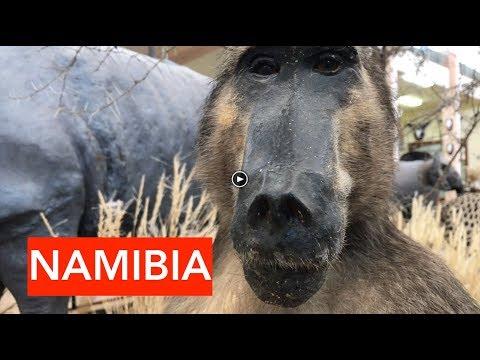 Swakopmund | Namibia's premier holiday resort!