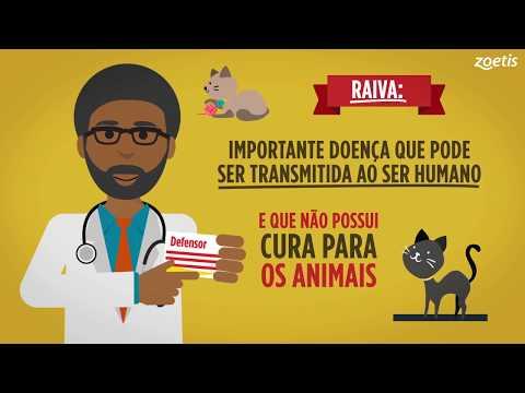 Vídeo em Animação 2D | Guia para Gatos