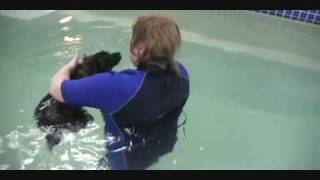 Toby's Therapy Session At Splashdog In Edmonds, Wa