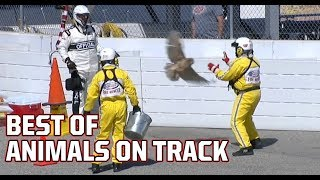 Best of NASCAR: On-track animal moments