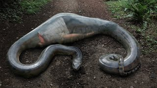 This Man Woke Up Inside The Snake. What Happened To His Body ?
