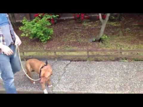 Pack of dogs attack woman in her own back yard from YouTube · Duration:  2 minutes 1 seconds