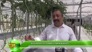 Milli patateste topraksız tarım bereketi