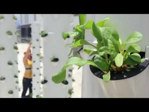 Future Growing® Rooftop Tower Garden® Farm, Escazu, Costa Rica