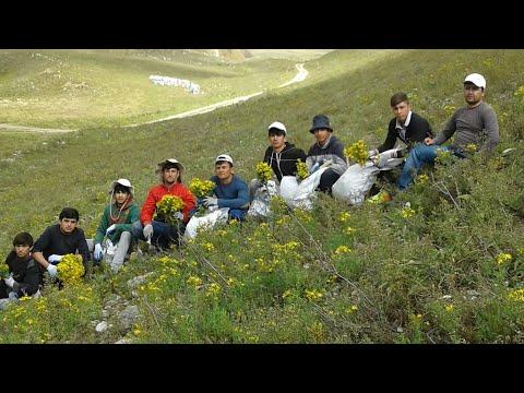 Целебные травы Таджикистана