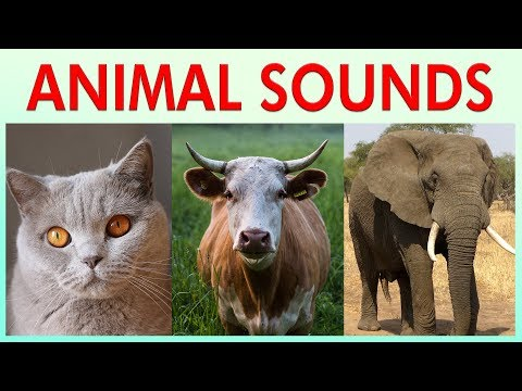 ANIMAL SOUNDS COMPILATION for Preschoolers, Kindergarten - Kids Learning Videos