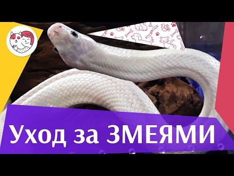 Правила ухода за змеями на ilikepet