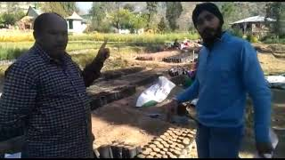 Plantation Of Deodar Tree Sapling |Process Of Plantation | Infotainment