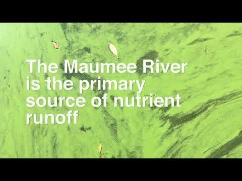 Algal bloom in Lake Erie brings green scum water