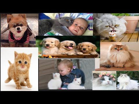 cute-kittens-and-cute-dogs-playing-with-babies-warm-your-heart-❤️