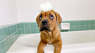 Blind Puppy Gets First Bath 🐶🛀 (LIVE)