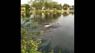 Man zwemt in Revius Plas voor de Bal