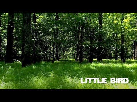 Смотреть клип Mflex Sounds - Little Bird
