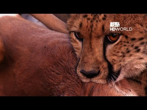 Animal Planet HD World | IntelSat 17 @66°E | Full Channel List |