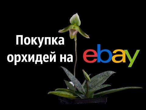 Покупка орхидей через EBay. Часть - 1.
