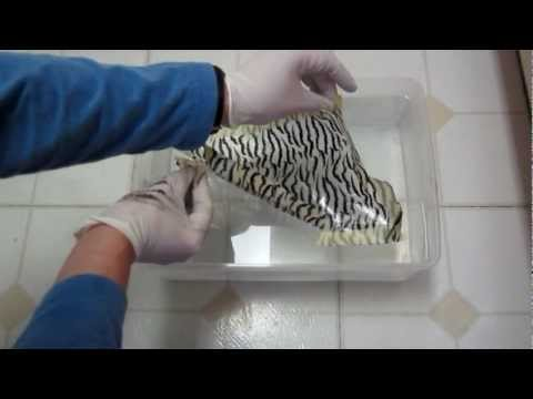 Mydipkit Review - Hydrographics Dip Kit tips