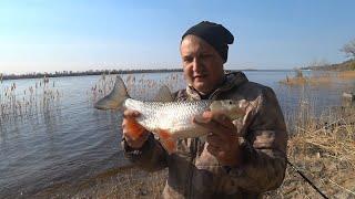 Рыбалка с Берега на Реке Ловля Голавля на Донки Закидушки