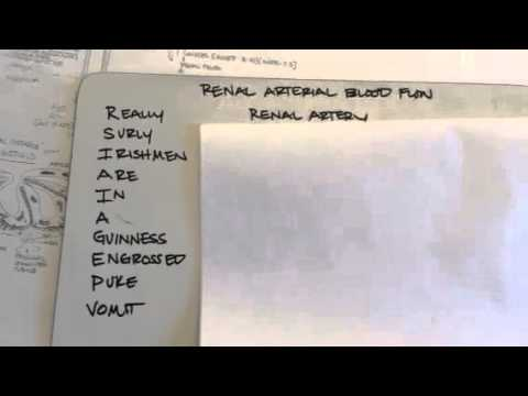 mnemonic for renal arterial blood flow - YouTube