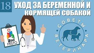 Уход за беременной и кормящей собакой | Как ухаживать за беременной собакой | Советы Ветеринара