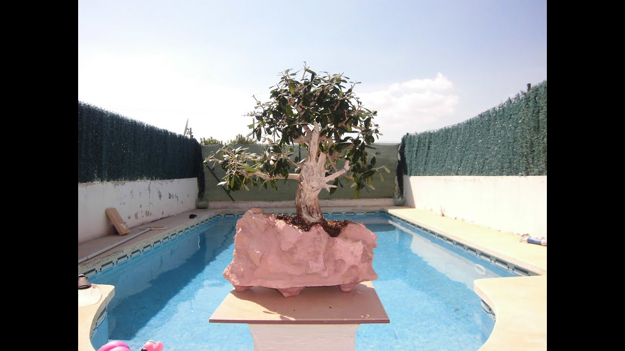 Hacer una maceta r stica de piedra para bonsai de jm qj - Hacer pared de piedra ...