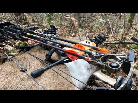 Deer Hunting MN - Public Land Success!