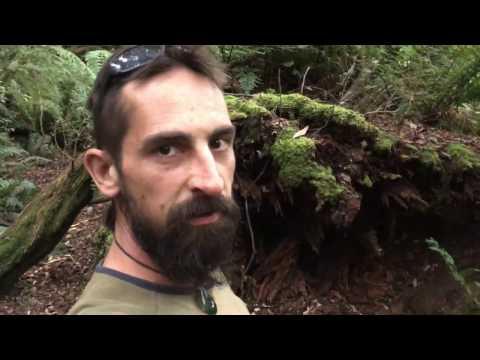 Camping wherever i feel like :) Pyengana Tasmania.