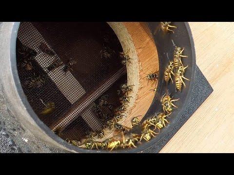 Wasp sucking machine XL