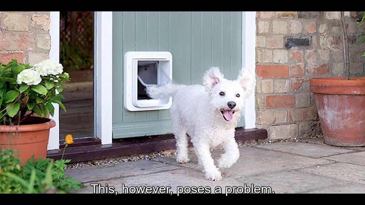 Preview image for 222: Smart Pet Door video