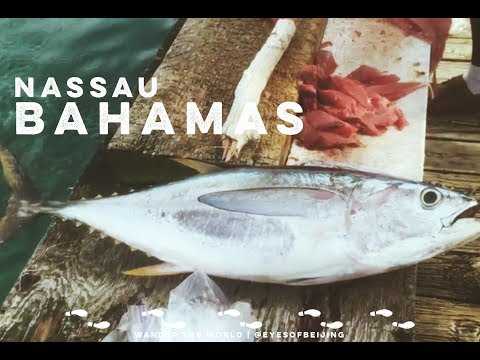 Wander the World | Nassau, BAHAMAS | 1st Time Deep Sea Fishing 2016