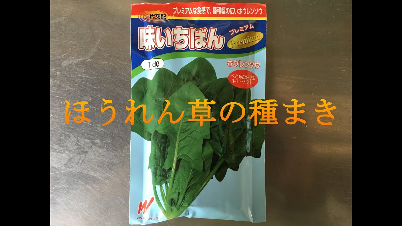 ほうれん草の種まき(解説付) #17 2019/08/26