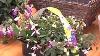 Gardening Tips with Tanya Visser -  Fuchsia