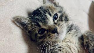 【雑談】子猫を拾いました