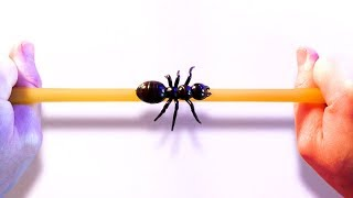 Ant On A Rubber Rope Paradox
