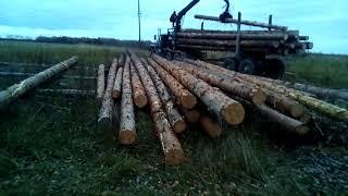 видео Готовим лес для сруба