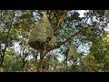 Building Bamboo Nest House/Tree House By