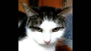 """СПб. Волонтёрский мини-приют """"Счастливый кот"""""""