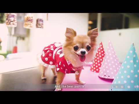 Wellness Top 10 Breeds: Chihuahua