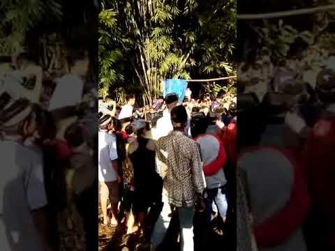 Beredar Video Judi Sabung Ayam yang Disinyalir dari Daerah Kajang