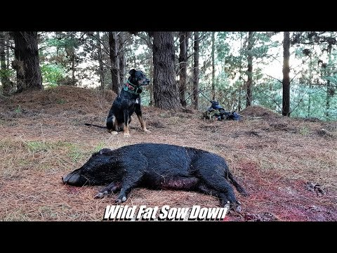 Pig Hunting In New Zealand With Dog & Knife~Clay Tall Stories